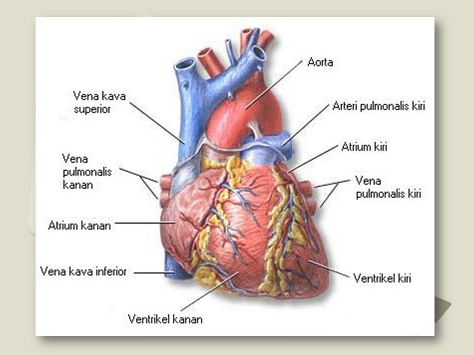 • Takiaritmia : frekuensi ventrikuler  > 100x/mnt (supraventrikuler & ventrikuler).