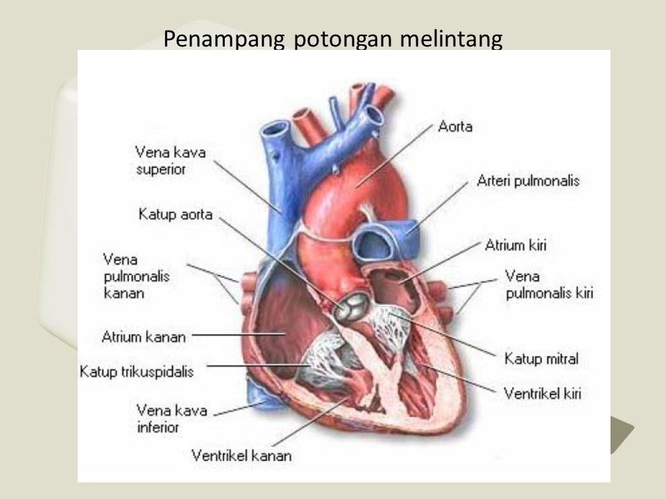 • Angina pada umumnya disebabkan oleh penyakit jantung koroner (PJK).