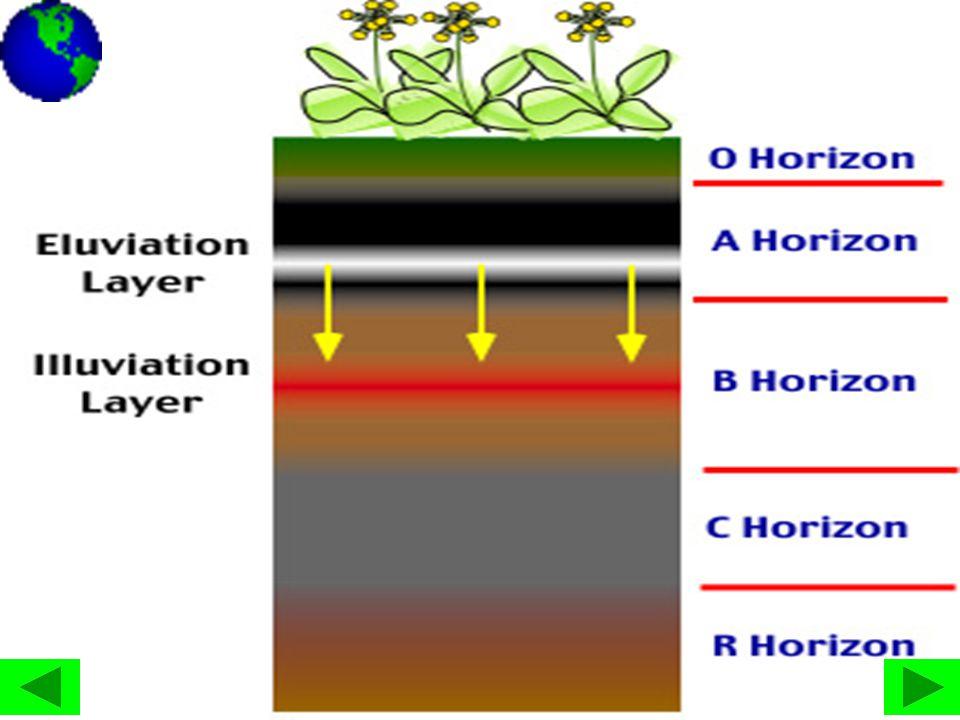• Jenis tanah alluvial yang banyak terdapat di sekitar dataran banjir sungai.