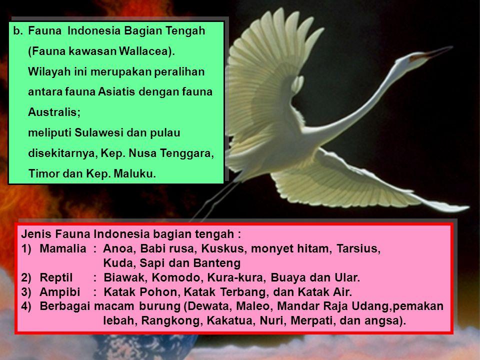 b.Fauna Indonesia Bagian Tengah (Fauna kawasan Wallacea). Wilayah ini merupakan peralihan antara fauna Asiatis dengan fauna Australis; meliputi Sulawe