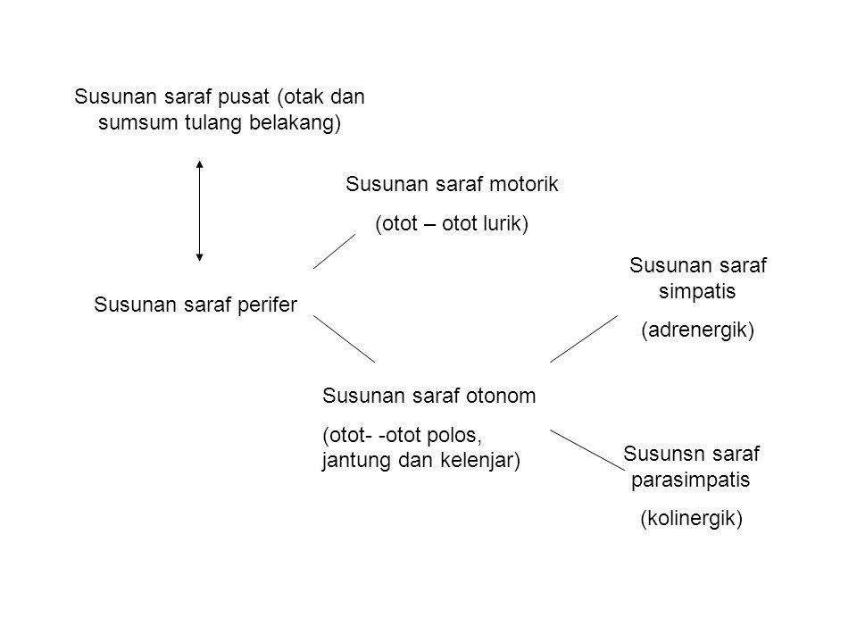 Susunan saraf pusat (otak dan sumsum tulang belakang) Susunan saraf perifer Susunan saraf motorik (otot – otot lurik) Susunan saraf otonom (otot- -otot polos, jantung dan kelenjar) Susunan saraf simpatis (adrenergik) Susunsn saraf parasimpatis (kolinergik)