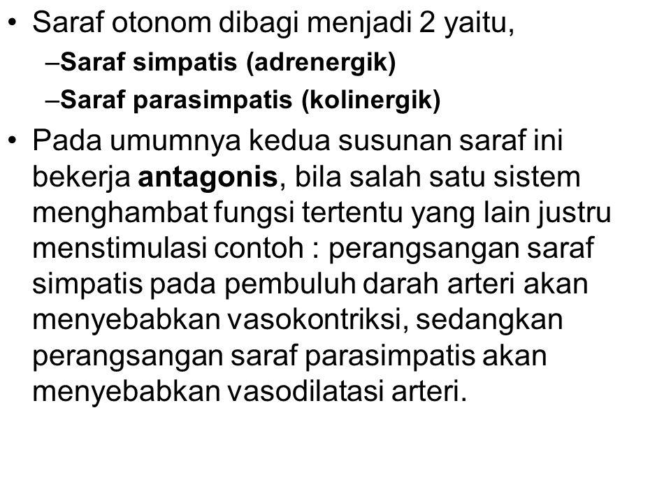 •Saraf otonom dibagi menjadi 2 yaitu, –Saraf simpatis (adrenergik) –Saraf parasimpatis (kolinergik) •Pada umumnya kedua susunan saraf ini bekerja antagonis, bila salah satu sistem menghambat fungsi tertentu yang lain justru menstimulasi contoh : perangsangan saraf simpatis pada pembuluh darah arteri akan menyebabkan vasokontriksi, sedangkan perangsangan saraf parasimpatis akan menyebabkan vasodilatasi arteri.
