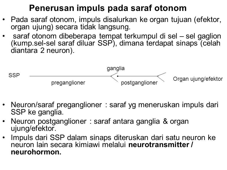 Penerusan impuls pada saraf otonom •Pada saraf otonom, impuls disalurkan ke organ tujuan (efektor, organ ujung) secara tidak langsung. • saraf otonom