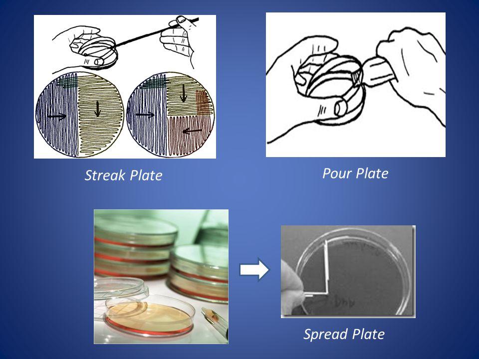 Streak Plate Pour Plate Spread Plate