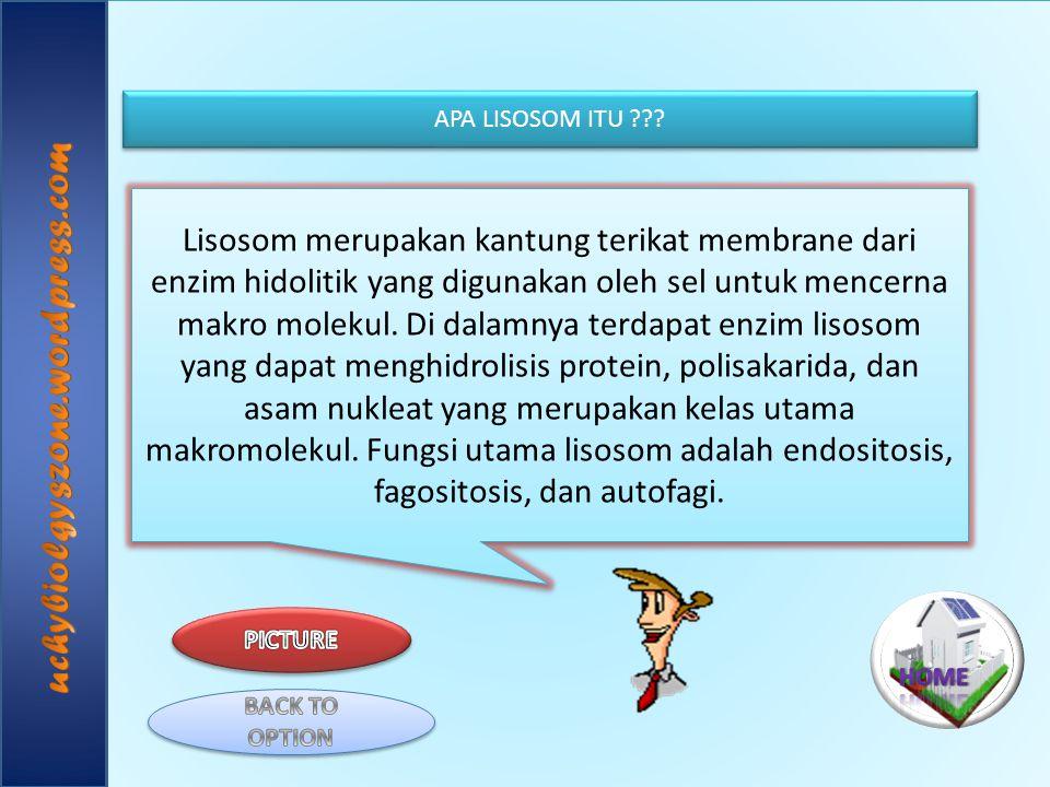 Lisosom merupakan kantung terikat membrane dari enzim hidolitik yang digunakan oleh sel untuk mencerna makro molekul. Di dalamnya terdapat enzim lisos