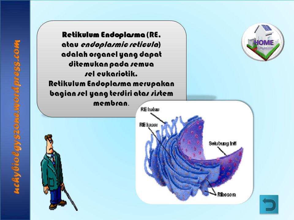 Retikulum Endoplasma (RE, atau endoplasmic reticula) adalah organel yang dapat ditemukan pada semua sel eukariotik. Retikulum Endoplasma merupakan bag