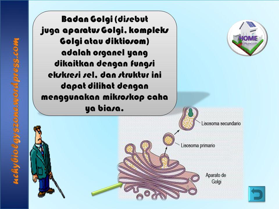 Badan Golgi (disebut juga aparatus Golgi, kompleks Golgi atau diktiosom) adalah organel yang dikaitkan dengan fungsi ekskresi sel, dan struktur ini da
