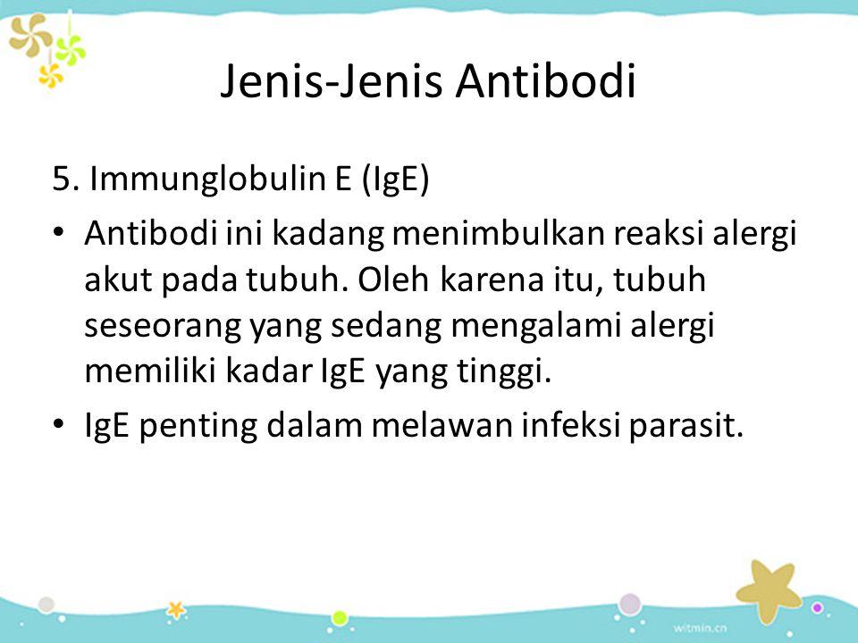 Jenis-Jenis Antibodi 5. Immunglobulin E (IgE) • Antibodi ini kadang menimbulkan reaksi alergi akut pada tubuh. Oleh karena itu, tubuh seseorang yang s