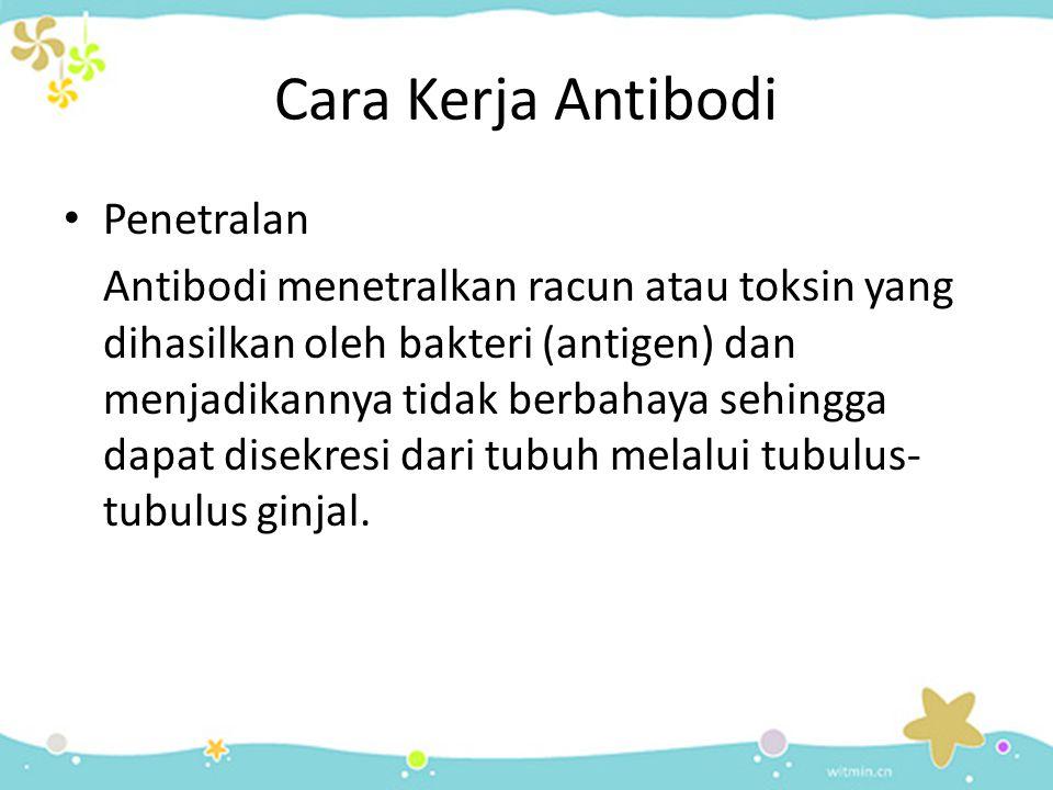 Cara Kerja Antibodi • Penetralan Antibodi menetralkan racun atau toksin yang dihasilkan oleh bakteri (antigen) dan menjadikannya tidak berbahaya sehin