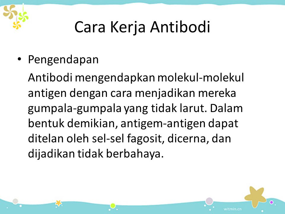 Cara Kerja Antibodi • Pengendapan Antibodi mengendapkan molekul-molekul antigen dengan cara menjadikan mereka gumpala-gumpala yang tidak larut. Dalam