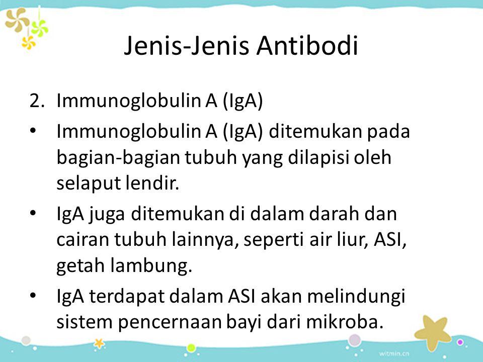 Jenis-Jenis Antibodi 2.Immunoglobulin A (IgA) • Immunoglobulin A (IgA) ditemukan pada bagian-bagian tubuh yang dilapisi oleh selaput lendir. • IgA jug