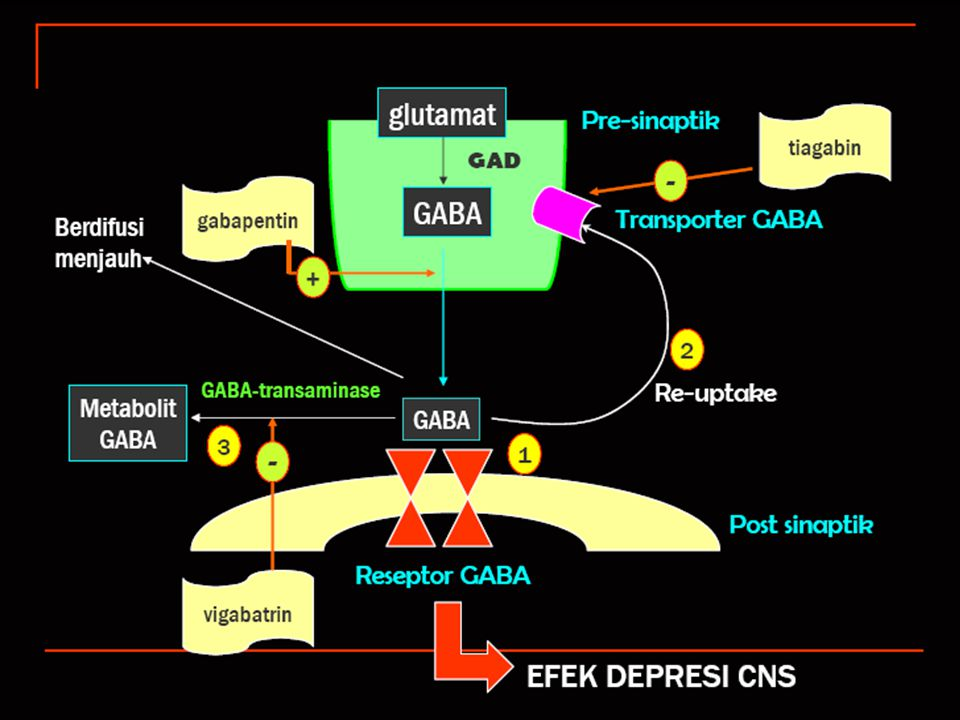 GABA Fungsi Proses sintesis dan degradasi Enzim yang bekerja Obat yang bekerja