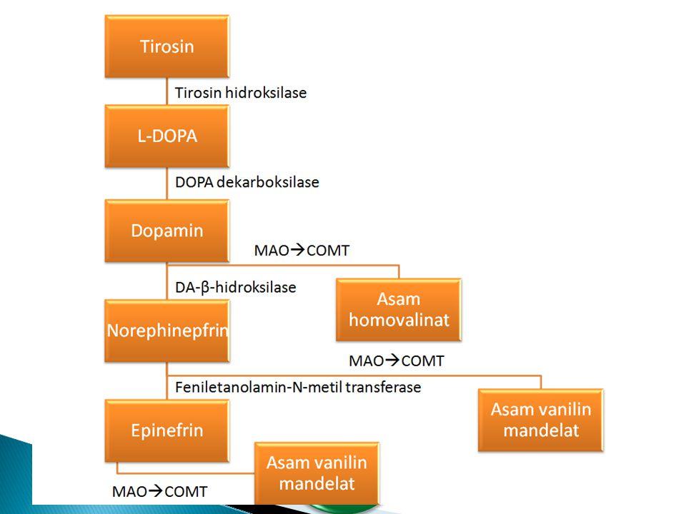 Katekolamin (dopamin, norepinefrin, epinefrin) fungsi Proses sintesis dan degradasi Enzim yang bekerja Obat yang bekerja