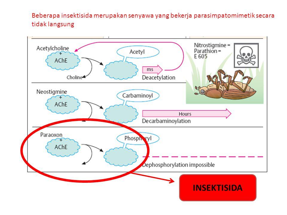 INSEKTISIDA Beberapa insektisida merupakan senyawa yang bekerja parasimpatomimetik secara tidak langsung