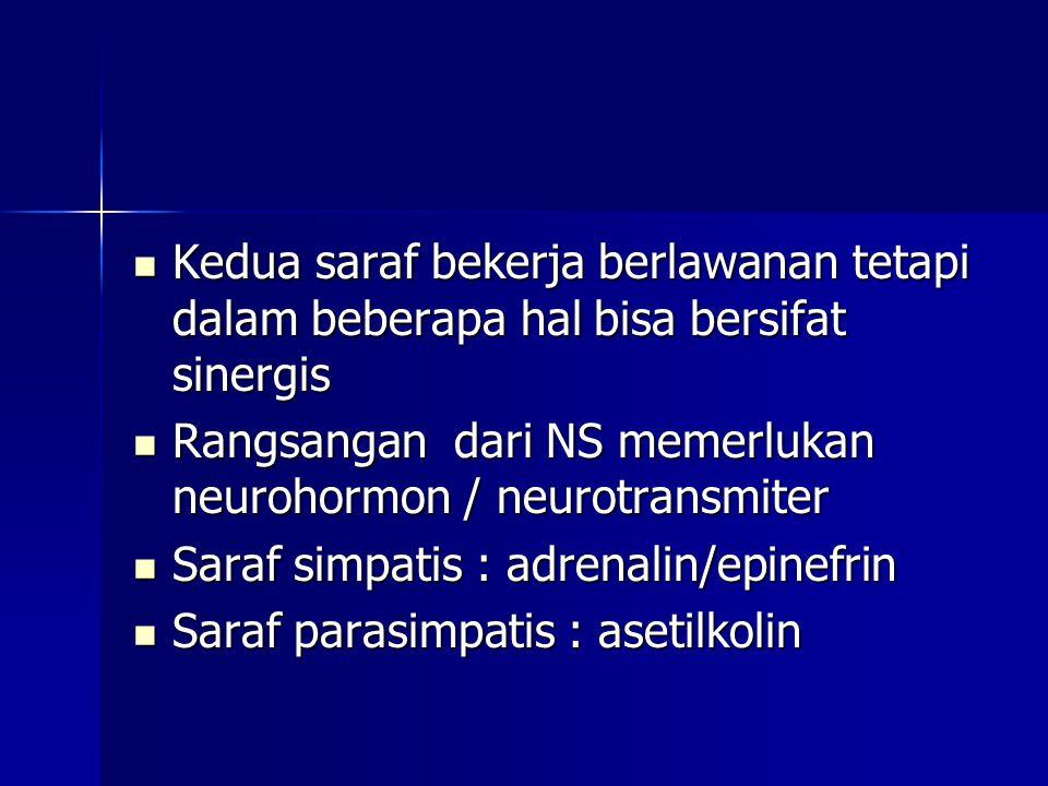  Kedua saraf bekerja berlawanan tetapi dalam beberapa hal bisa bersifat sinergis  Rangsangan dari NS memerlukan neurohormon / neurotransmiter  Saraf simpatis : adrenalin/epinefrin  Saraf parasimpatis : asetilkolin