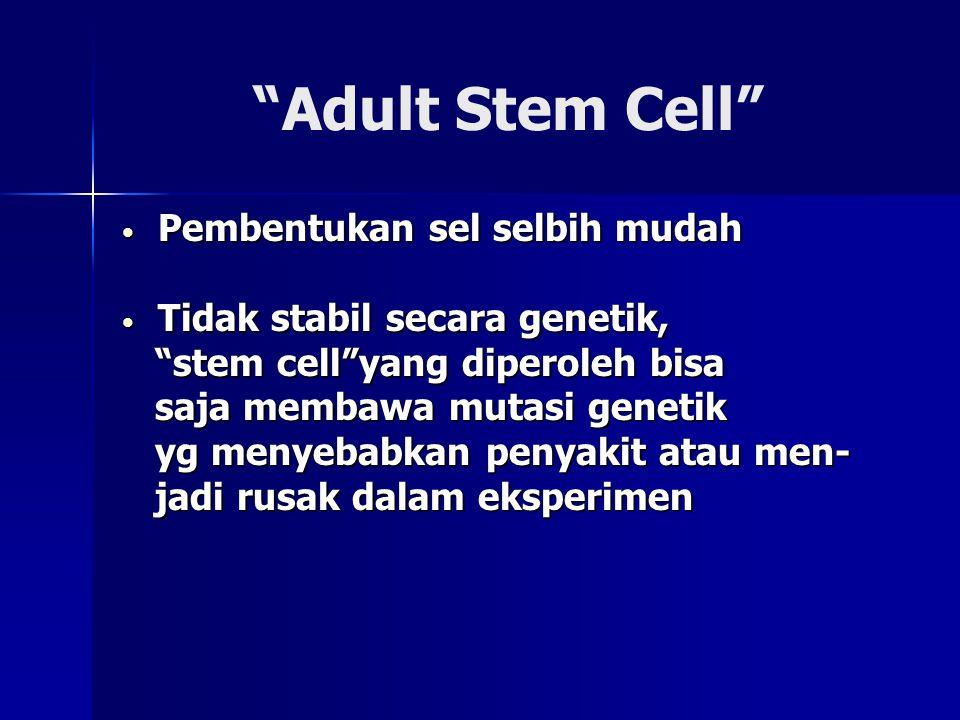 """""""Adult Stem Cell"""" • Pembentukan sel selbih mudah • Tidak stabil secara genetik, """"stem cell""""yang diperoleh bisa """"stem cell""""yang diperoleh bisa saja mem"""