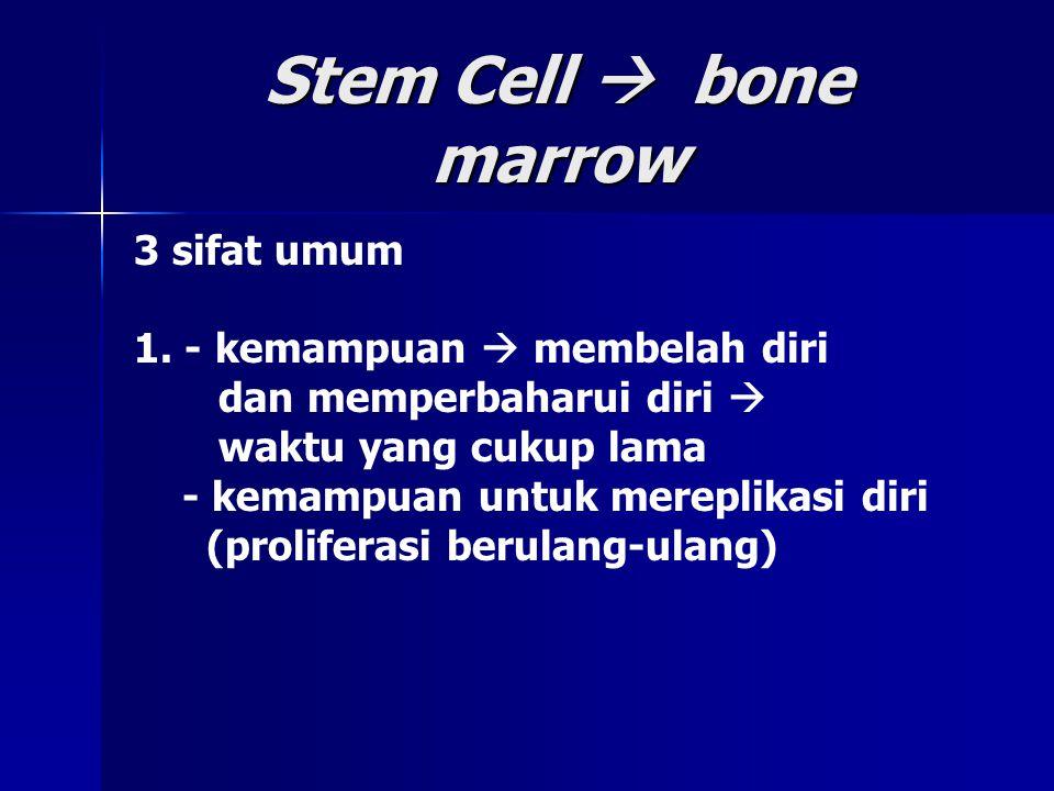 Stem Cell  bone marrow 3 sifat umum 1. - kemampuan  membelah diri dan memperbaharui diri  waktu yang cukup lama - kemampuan untuk mereplikasi diri