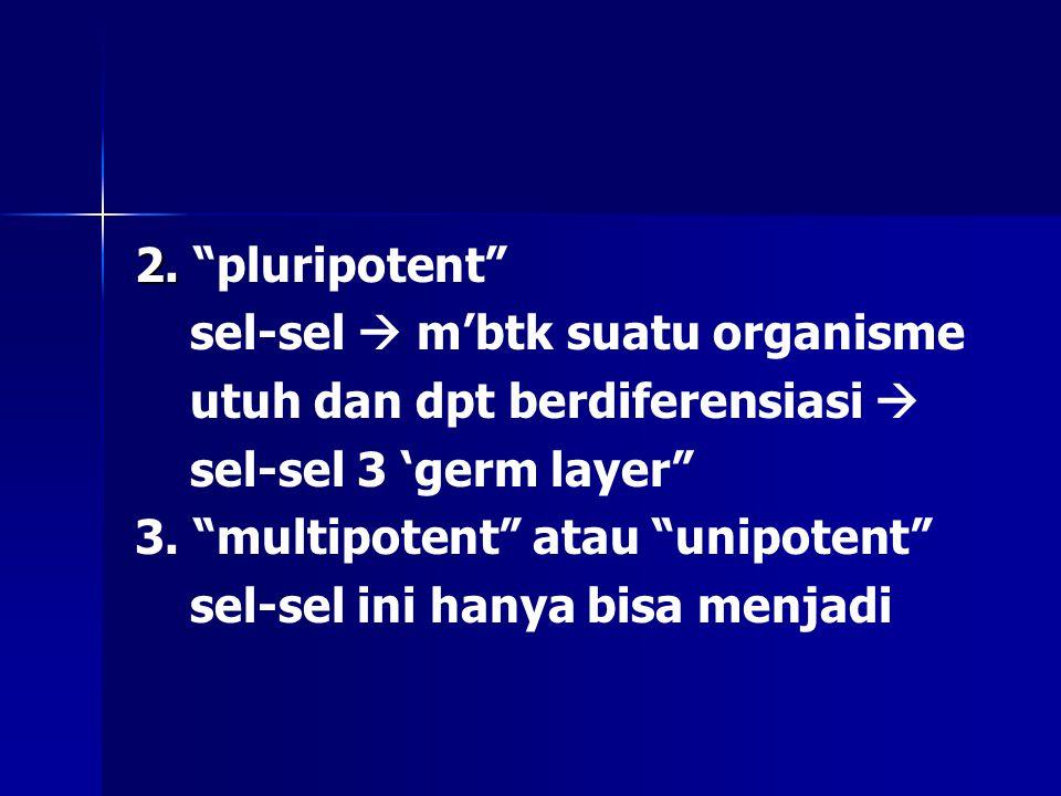 """2. 2. """"pluripotent"""" sel-sel  m'btk suatu organisme utuh dan dpt berdiferensiasi  sel-sel 3 'germ layer"""" 3. """"multipotent"""" atau """"unipotent"""" sel-sel in"""