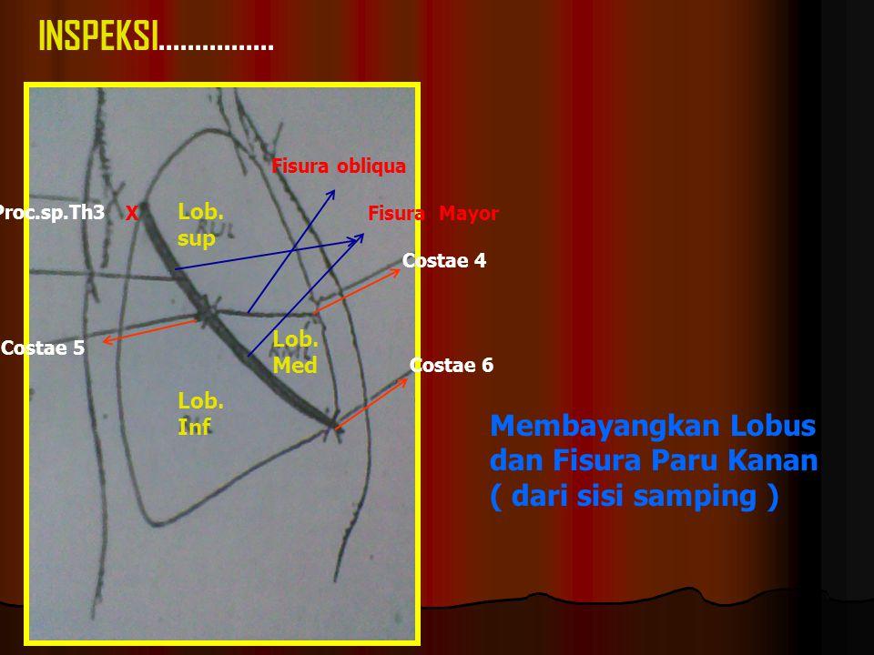 Proc.sp.Th3 Costae 4 Costae 6 Costae 5 Fisura obliqua Lob.