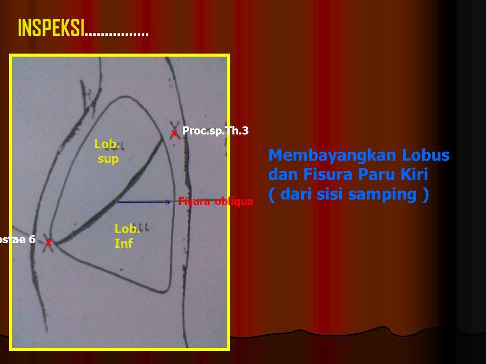 Proc.sp.Th.3 Fisura obliqua Costae 6 Lob.sup Lob.