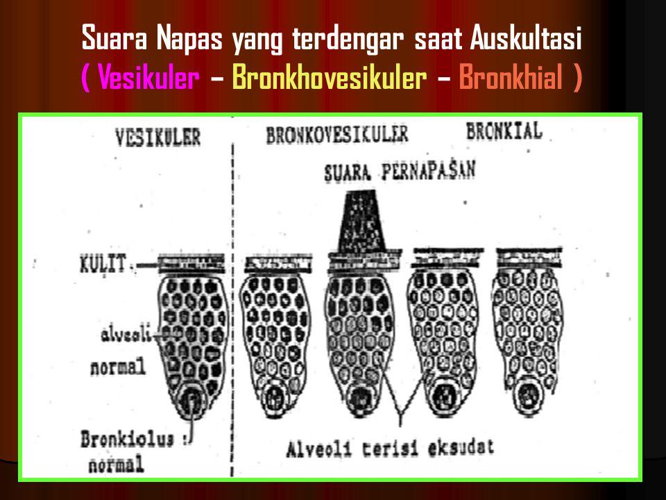 Suara Napas yang terdengar saat Auskultasi ( Vesikuler – Bronkhovesikuler – Bronkhial )