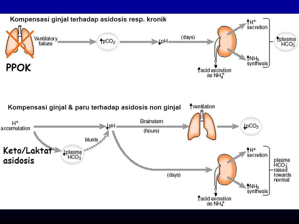 Kompensasi ginjal terhadap asidosis resp. kronik Kompensasi ginjal & paru terhadap asidosis non ginjal PPOK Keto/Laktat asidosis