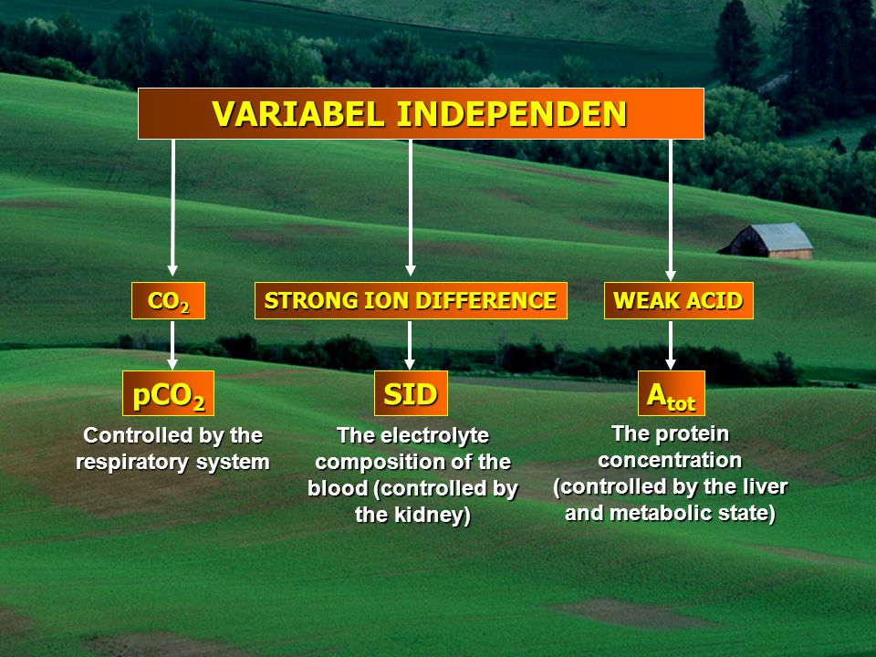 VARIABEL INDEPENDEN CO 2 STRONG ION DIFFERENCE WEAK ACID pCO 2 SID A tot Controlled by the respiratory system The electrolyte composition of the blood (controlled by the kidney) The protein concentration (controlled by the liver and metabolic state)