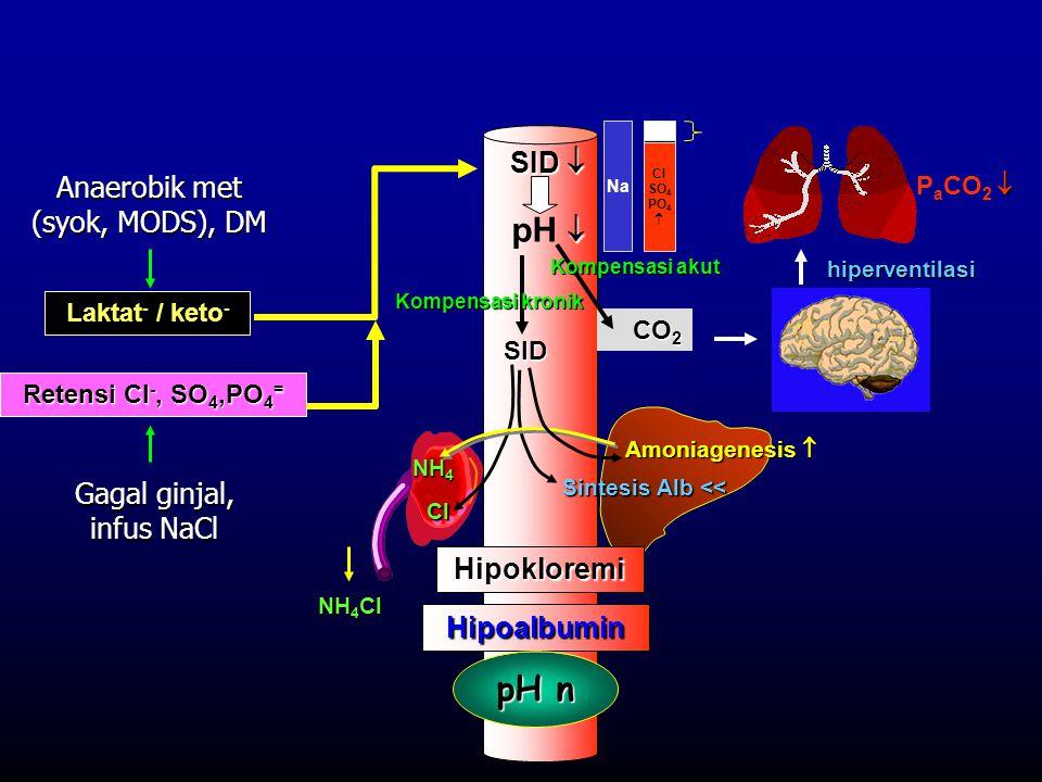  P a CO 2   pH  NH 4 Cl Hipoalbumin Laktat - / keto - SID  Sintesis Alb << Hipokloremi Amoniagenesis  Retensi Cl -, SO 4,PO 4 = CO 2 SID Kompens