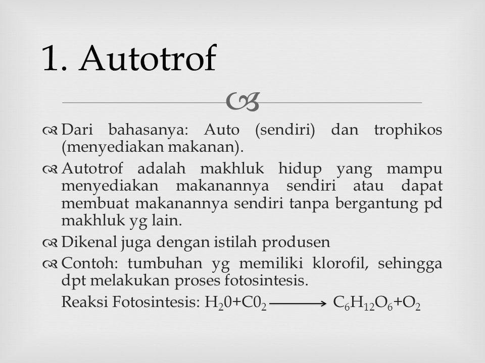   Dari bahasanya: Auto (sendiri) dan trophikos (menyediakan makanan).  Autotrof adalah makhluk hidup yang mampu menyediakan makanannya sendiri atau