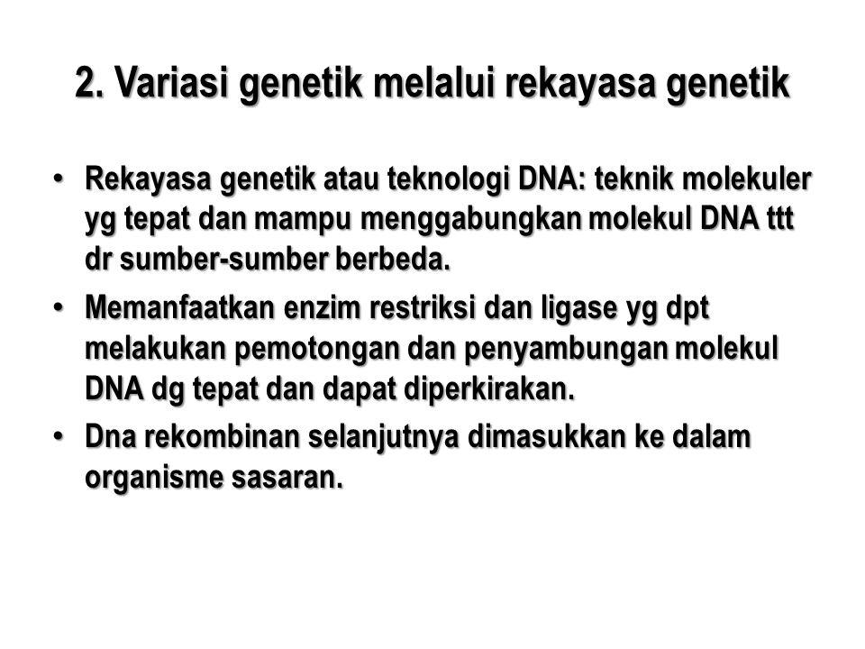 2. Variasi genetik melalui rekayasa genetik • Rekayasa genetik atau teknologi DNA: teknik molekuler yg tepat dan mampu menggabungkan molekul DNA ttt d