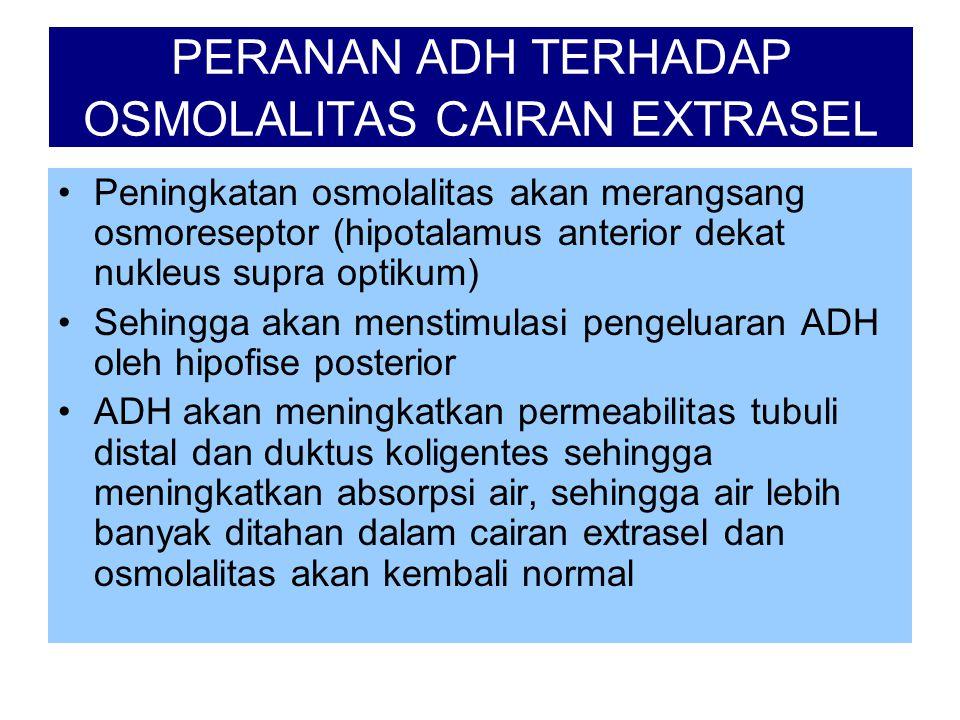 PERANAN ADH TERHADAP OSMOLALITAS CAIRAN EXTRASEL •Peningkatan osmolalitas akan merangsang osmoreseptor (hipotalamus anterior dekat nukleus supra optik