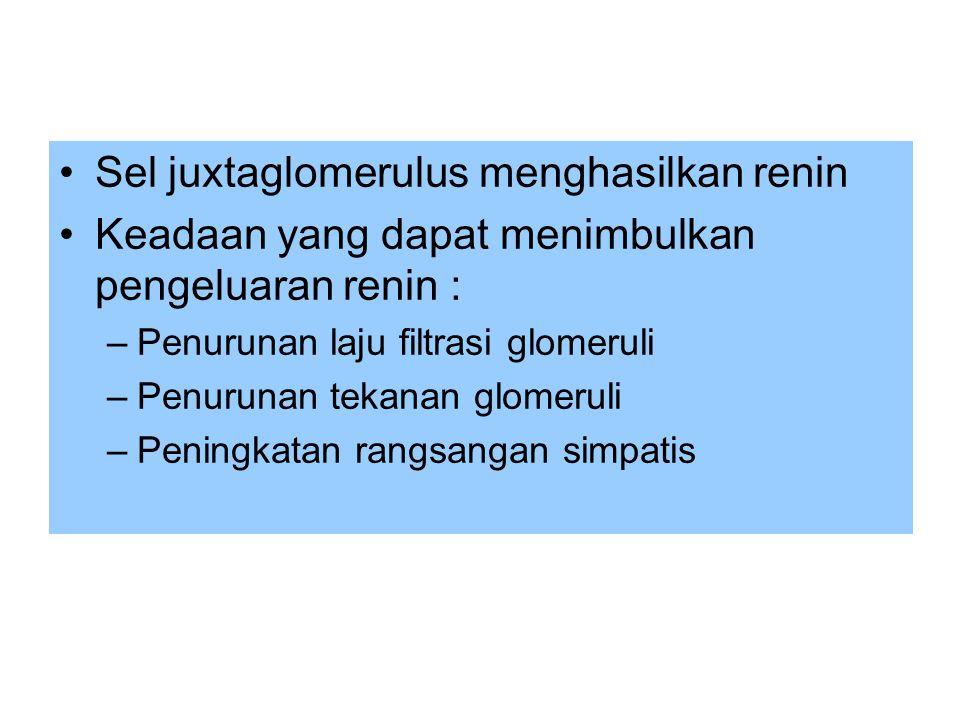 •Sel juxtaglomerulus menghasilkan renin •Keadaan yang dapat menimbulkan pengeluaran renin : –Penurunan laju filtrasi glomeruli –Penurunan tekanan glom