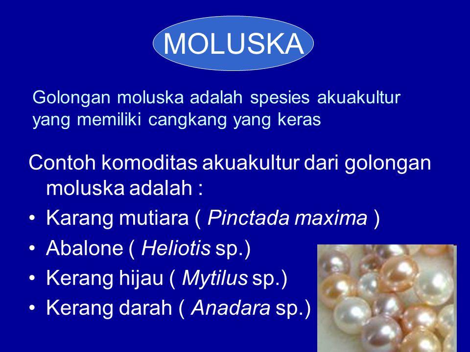 Golongan moluska adalah spesies akuakultur yang memiliki cangkang yang keras Contoh komoditas akuakultur dari golongan moluska adalah : •Karang mutiar