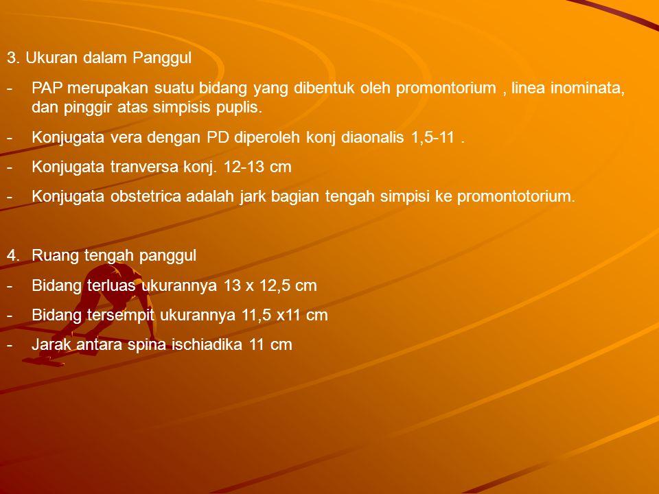 3. Ukuran dalam Panggul -PAP merupakan suatu bidang yang dibentuk oleh promontorium, linea inominata, dan pinggir atas simpisis puplis. -Konjugata ver