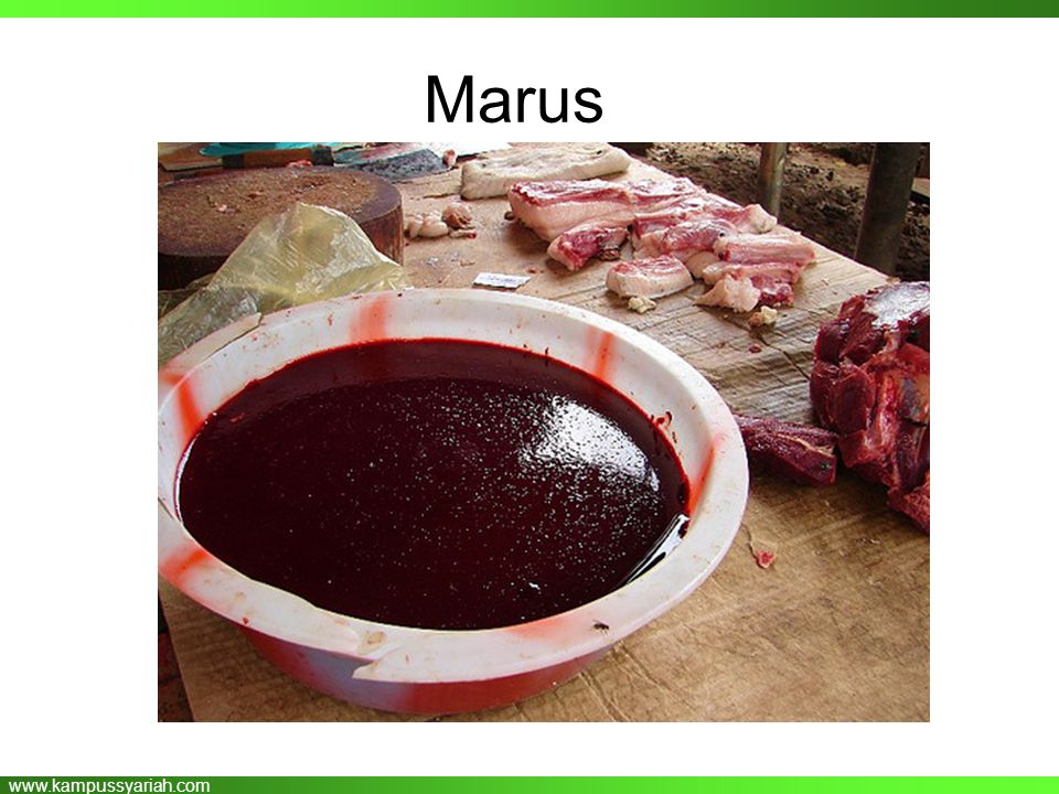 www.kampussyariah.com Marus