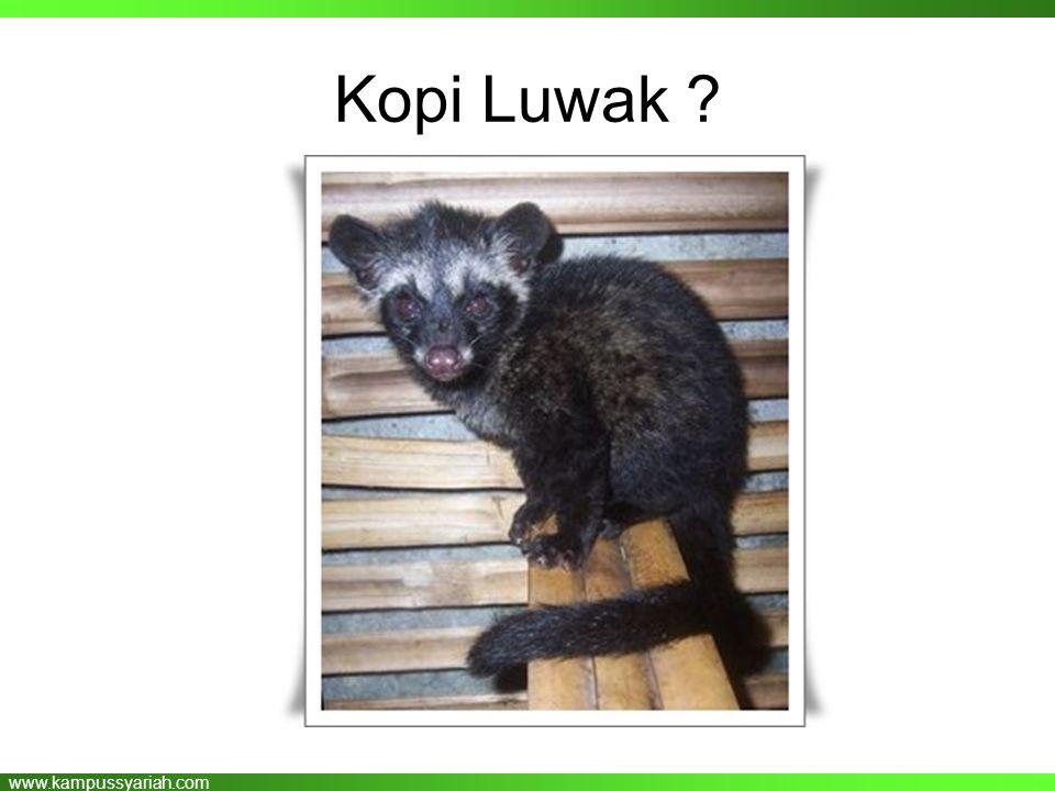 www.kampussyariah.com Kopi Luwak ?