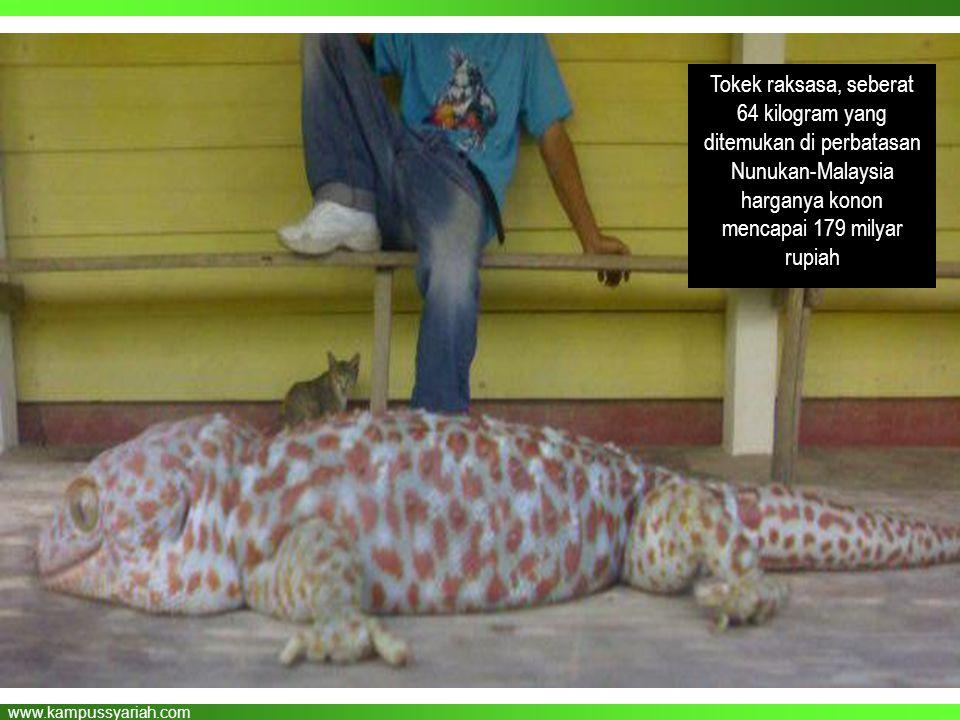 www.kampussyariah.com dilarang membunuh خَمْسٌ فَوَاسِقُ يُقْتَلْنَ فِي الْحَرَمِ الْفَأْرَةُ وَالْعَقْرَبُ وَالْحُدَيَّا وَالْغُرَابُ وَالْكَلْبُ الْ