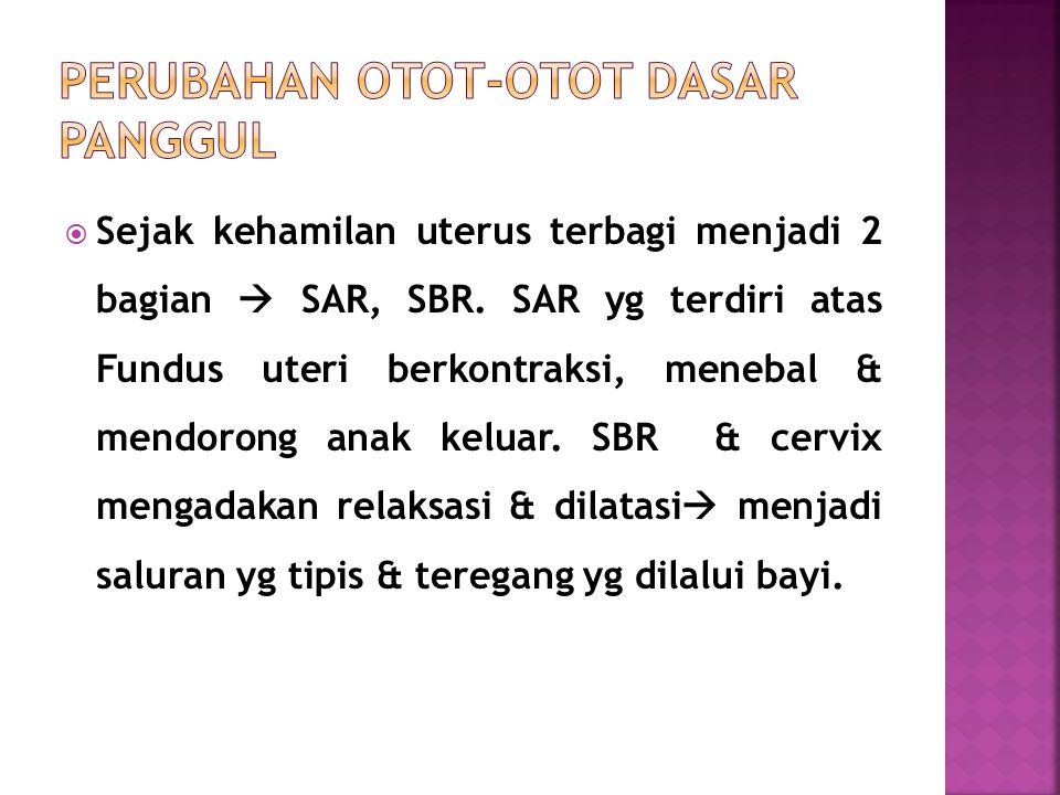  Sejak kehamilan uterus terbagi menjadi 2 bagian  SAR, SBR.