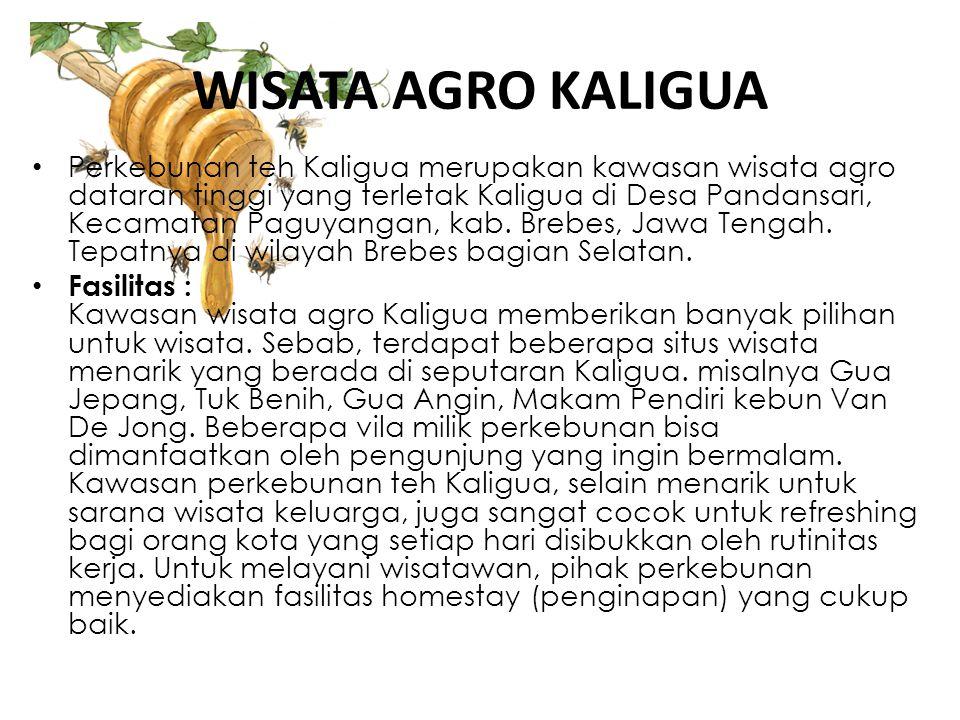 WISATA AGRO KALIGUA • Perkebunan teh Kaligua merupakan kawasan wisata agro dataran tinggi yang terletak Kaligua di Desa Pandansari, Kecamatan Paguyang