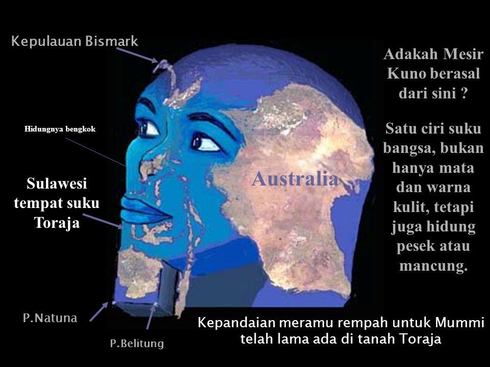Hidungnya bengkok P.Natuna P.Belitung Kepulauan Bismark Australia Sulawesi tempat suku Toraja Adakah Mesir Kuno berasal dari sini ? Kepandaian meramu