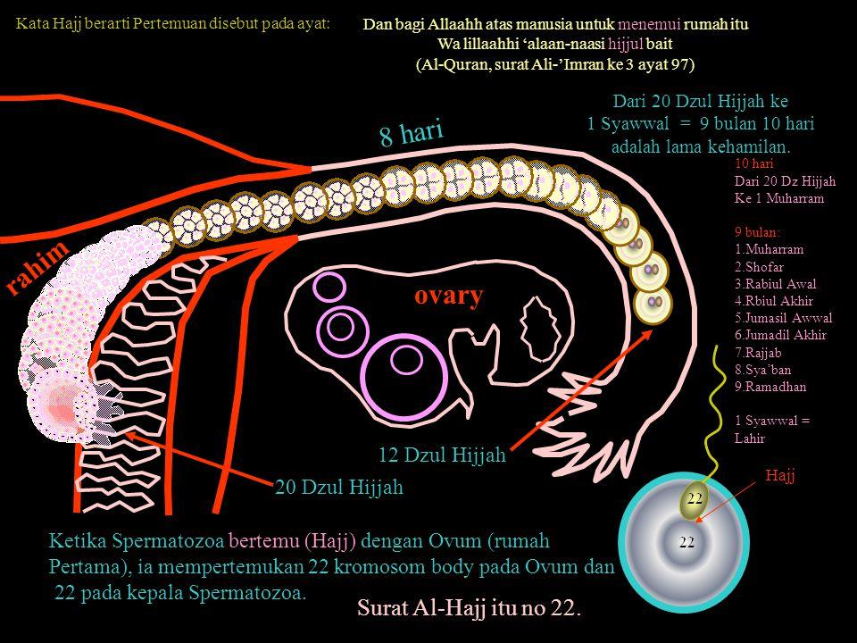 Dari 20 Dzul Hijjah ke 1 Syawwal = 9 bulan 10 hari adalah lama kehamilan. Ketika Spermatozoa bertemu (Hajj) dengan Ovum (rumah Pertama), ia mempertemu