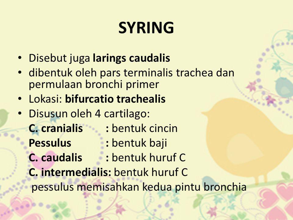 SYRING • Disebut juga larings caudalis • dibentuk oleh pars terminalis trachea dan permulaan bronchi primer • Lokasi: bifurcatio trachealis • Disusun