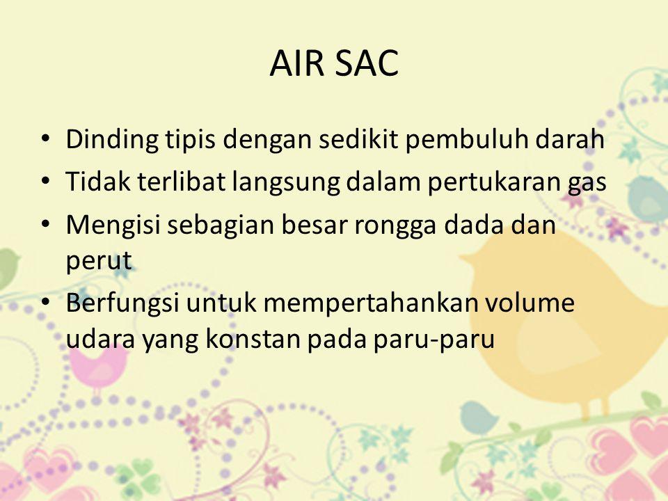 AIR SAC • Dinding tipis dengan sedikit pembuluh darah • Tidak terlibat langsung dalam pertukaran gas • Mengisi sebagian besar rongga dada dan perut •