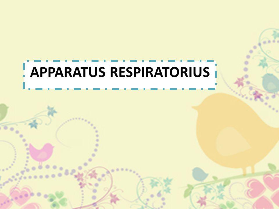 APPARATUS RESPIRATORIUS