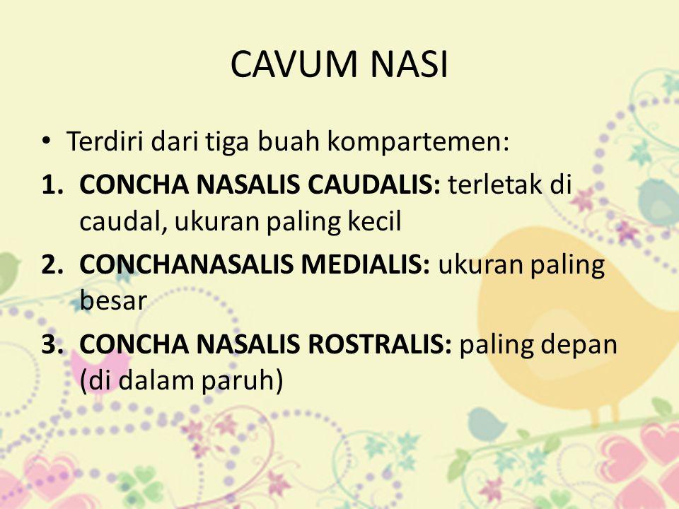 CAVUM NASI • Terdiri dari tiga buah kompartemen: 1.CONCHA NASALIS CAUDALIS: terletak di caudal, ukuran paling kecil 2.CONCHANASALIS MEDIALIS: ukuran p