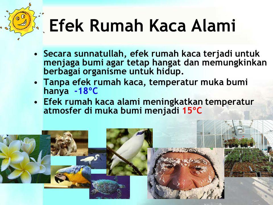 Efek Rumah Kaca Alami •Secara sunnatullah, efek rumah kaca terjadi untuk menjaga bumi agar tetap hangat dan memungkinkan berbagai organisme untuk hidup.