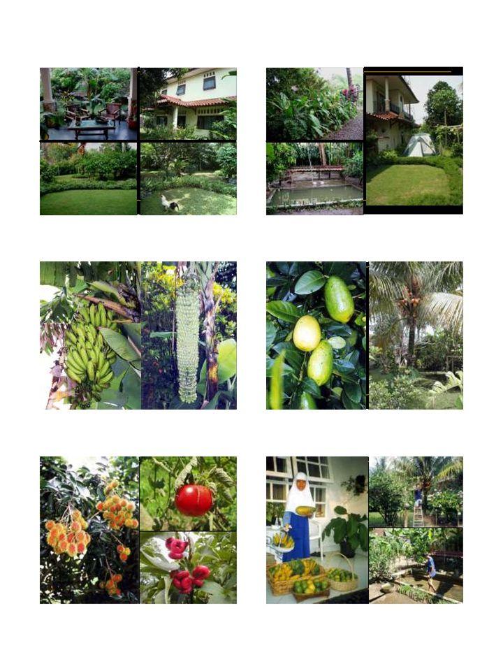 BUDIDAYA ORGANIK  Budidaya tanaman secara organik – sesedikit mungkin menggunakan bahan anorganik.