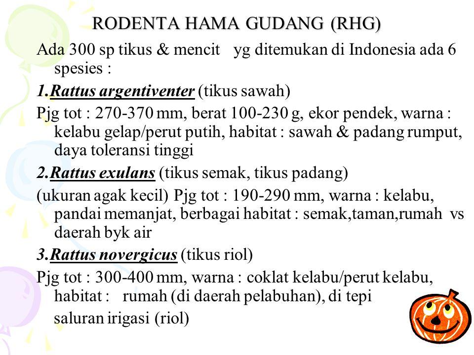 RODENTA HAMA GUDANG (RHG) Ada 300 sp tikus & mencit yg ditemukan di Indonesia ada 6 spesies : 1.Rattus argentiventer (tikus sawah) Pjg tot : 270-370 mm, berat 100-230 g, ekor pendek, warna : kelabu gelap/perut putih, habitat : sawah & padang rumput, daya toleransi tinggi 2.Rattus exulans (tikus semak, tikus padang) (ukuran agak kecil) Pjg tot : 190-290 mm, warna : kelabu, pandai memanjat, berbagai habitat : semak,taman,rumah vs daerah byk air 3.Rattus novergicus (tikus riol) Pjg tot : 300-400 mm, warna : coklat kelabu/perut kelabu, habitat : rumah (di daerah pelabuhan), di tepi saluran irigasi (riol)