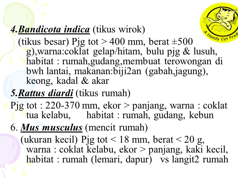 4.Bandicota indica (tikus wirok) (tikus besar) Pjg tot > 400 mm, berat ±500 g),warna:coklat gelap/hitam, bulu pjg & lusuh, habitat : rumah,gudang,memb