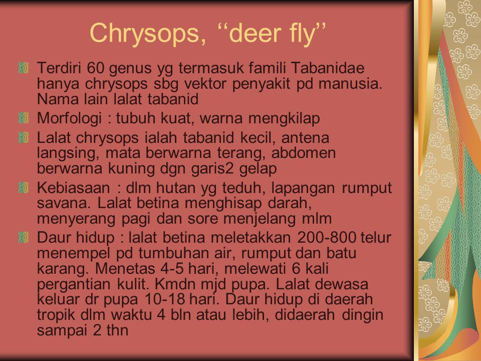 Chrysops, ''deer fly'' Terdiri 60 genus yg termasuk famili Tabanidae hanya chrysops sbg vektor penyakit pd manusia.